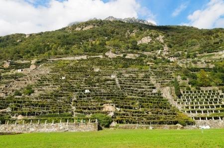 Viticoltura eroica valle d'aosta
