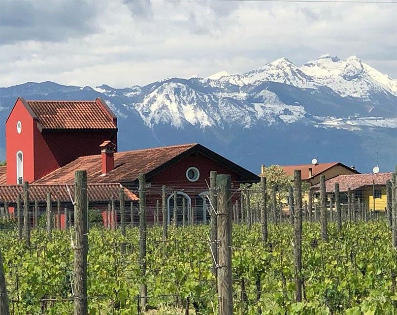 San Simone vigne