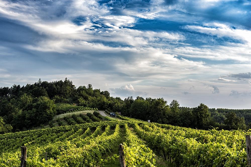 Vigne Vinchio Vaglio