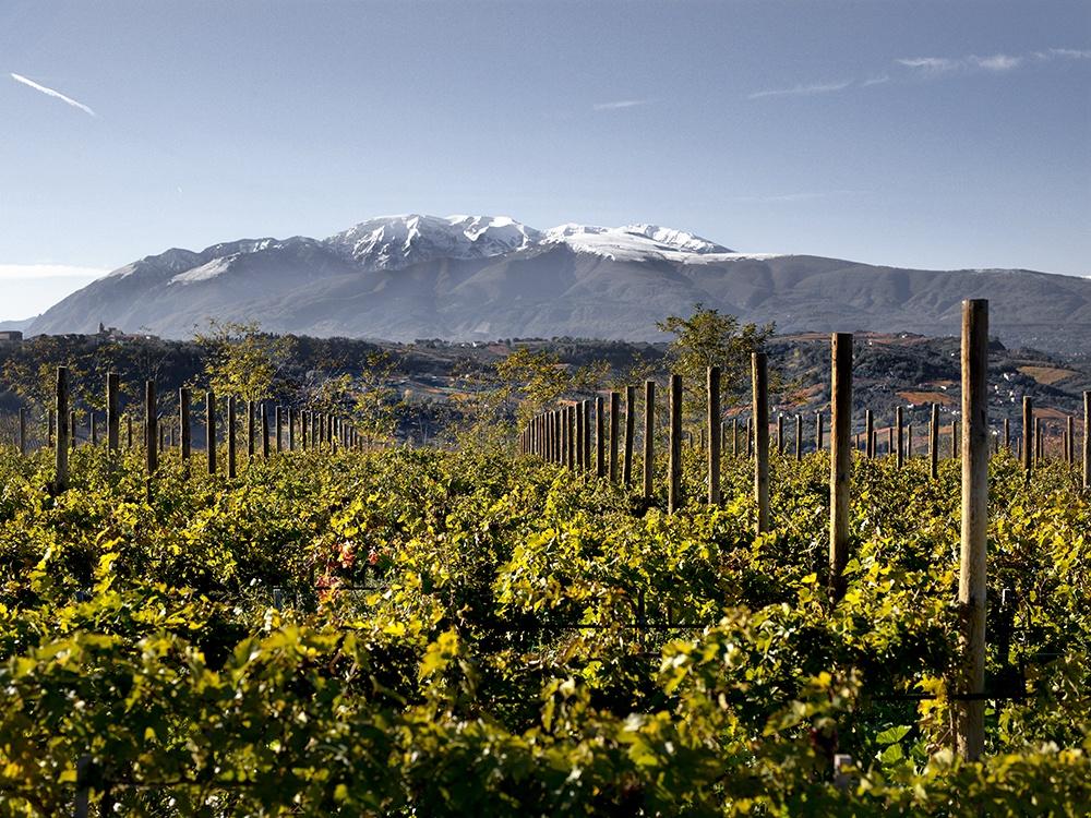 Di Sipio vigne