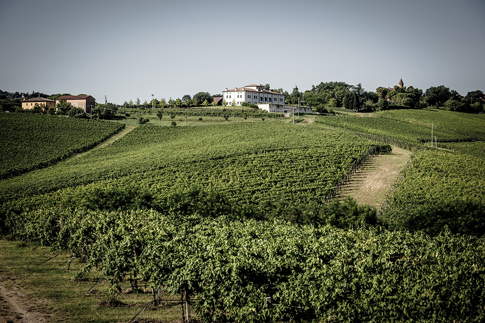 Umberto Cesari vigne